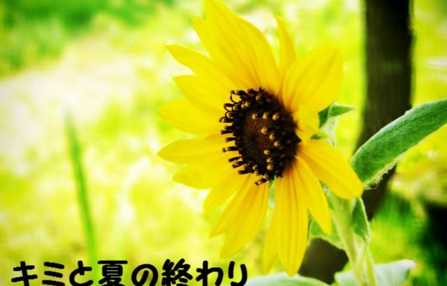 【小説・キミと夏の終わり】幕間・壱 君がいた夏は
