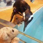 【池袋】ペンギンのいるBARに行ってみたなの!