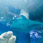 【アクアパーク品川】最先端の技術と融合した水族館なの!【もろあに】