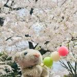 【上野公園】花見大激戦区で桜を観たなの!