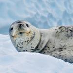 【南極5】南極には動物さんたちがいっぱいなの!【アザラシ・クジラ】
