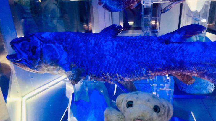 【沼津・もろあに】とってもレアな深海生物たちに会えるなの!【シーラカンスミュージアム】