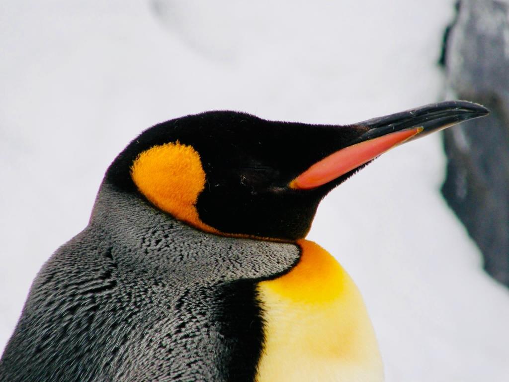 ソーラン 節 ペンギン