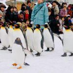【旭川冬祭り】さっぽろ雪まつりより大きい!? ペンギンも歩くなの!【旭山動物園】