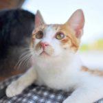 【猫の日】ネコちゃんがたくさんいる旅先特集なの!【もろあに】
