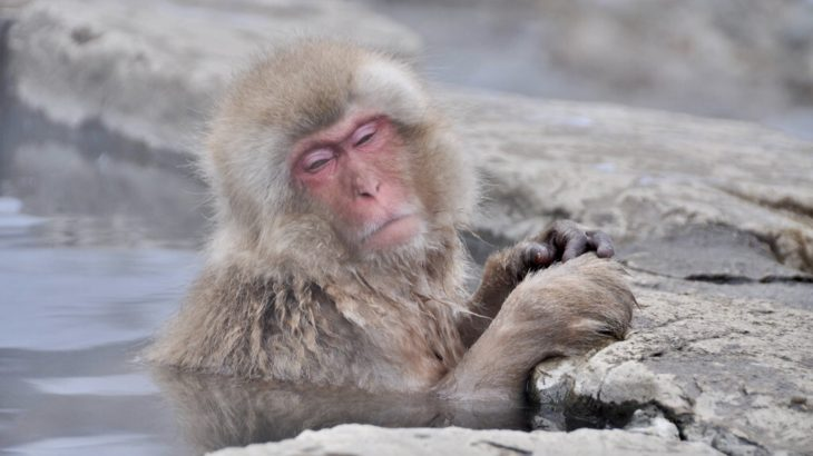【地獄谷野猿公苑】世界で唯一! 温泉に入る野生のお猿さんが見られるなの!【渋温泉・須坂】