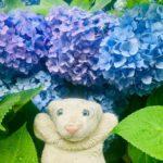 【鎌倉・明月院】美しすぎる明月院ブルー一色のお寺なの!【紫陽花】