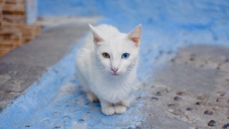 【猫の日】世界のネコちゃんたちの写真を撮ったなの!【もろあに】