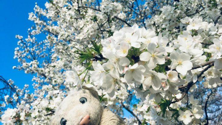 【新宿御苑】都会のオアシスで、桜と紅葉と新海誠を楽しむなの!