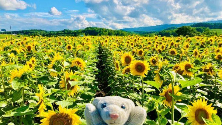 【現在7記事】北海道はでっかいどうシリーズまとめなの!
