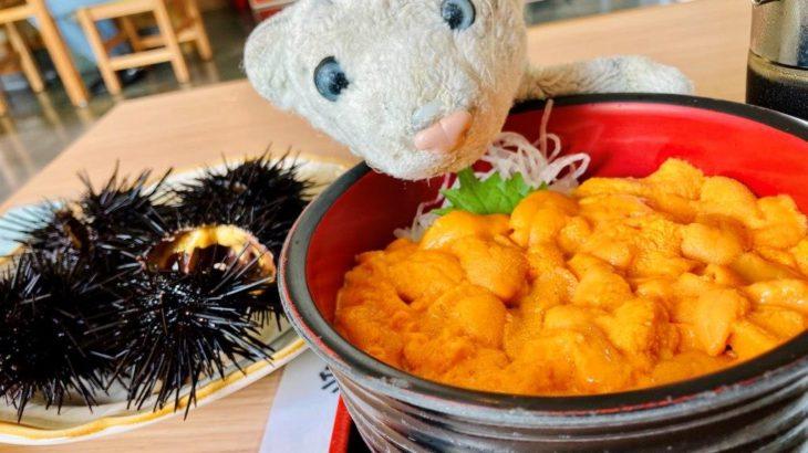 【積丹】最高級のウニ・エゾバフンウニを食べに行ったなの!【後志】